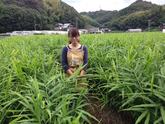 水田さん@生姜畑